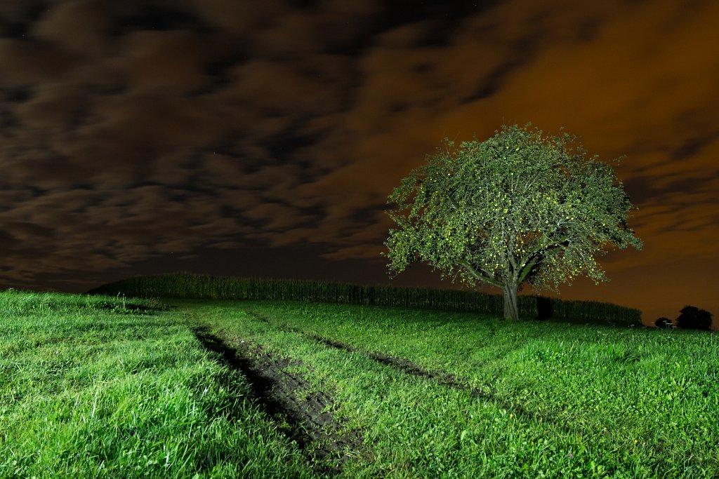 nightly tree